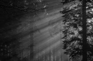Forest lightshaft