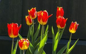 Tulips On A Grave