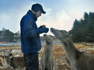 How to attract reindeer